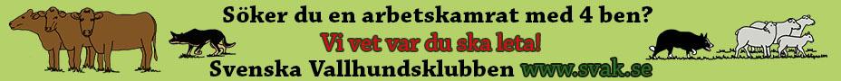 Svenska Vallhundsklubben - SVAK – avel, utbildning och förmedling av vallhundar –  för en god och effektiv djurhantering i lantbruket. SVaK är officiell rasklubb för border collie i Sverige.